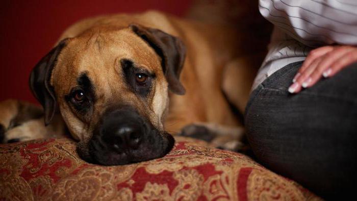 лактостоп для собак инструкция отзывы - фото 10