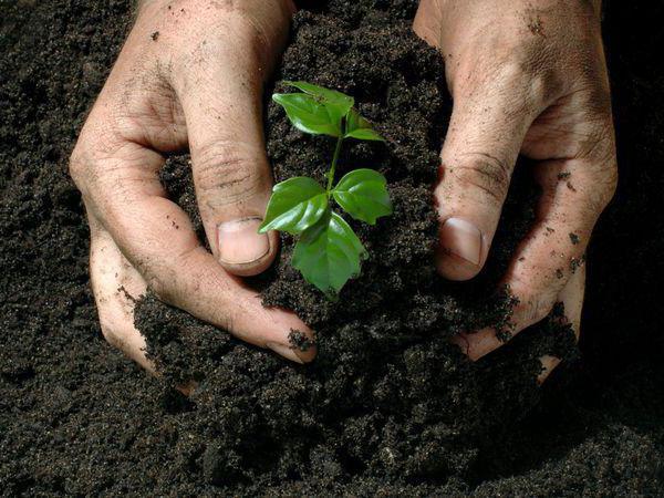 производство органоминеральных удобрений