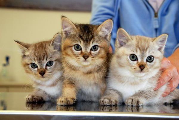 поливак для кошек от лишая
