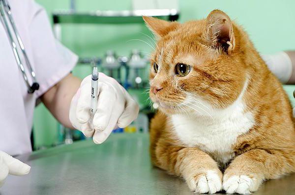 поливак тм для кошек инструкция