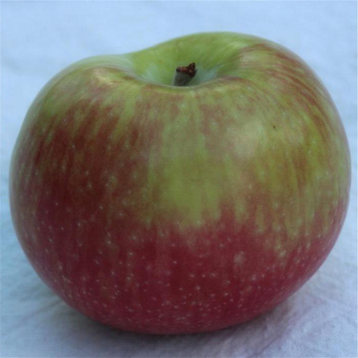 Яблоки сорт