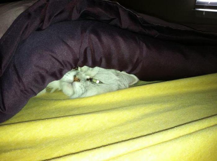 насморк у кошки лечение в домашних