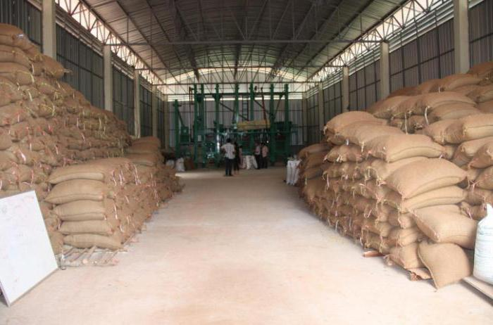 как выращивают рис в краснодарском крае
