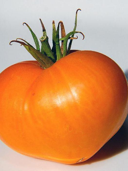 оранжевое сердце томат отзывы