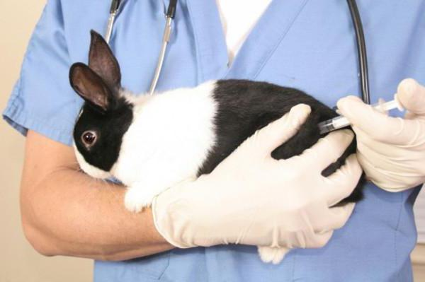 прививки кроликам от миксоматоза и вгбк