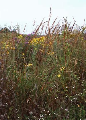удобрение из травы