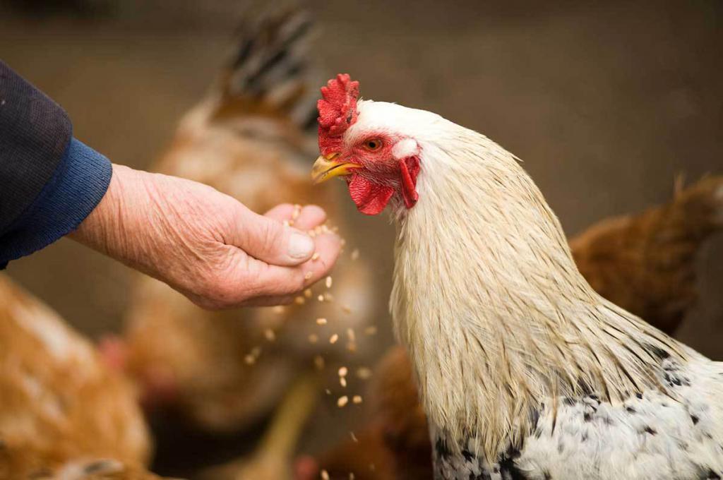 Как использовать антибиотики