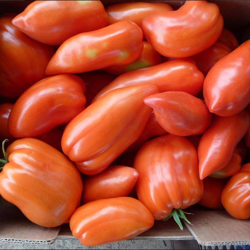 сорт помидор карнабель отзывы