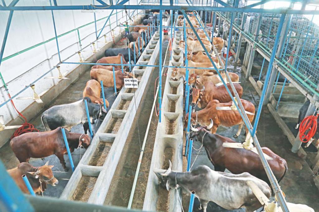 Помещения для коров