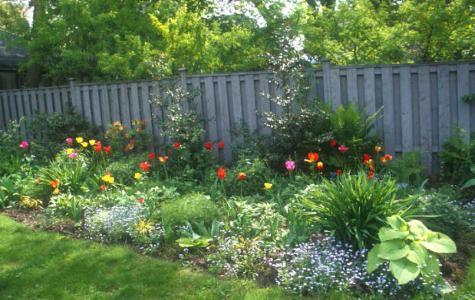Цветы садовые многолетники для дачи и