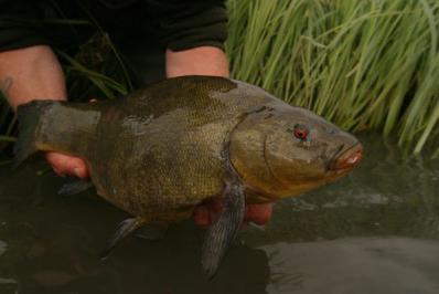 пруд для рыбы своими руками