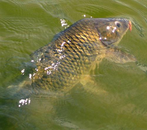 как сделать пруд для рыбы