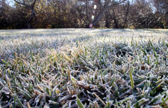 Догляд за газоном восени підготовка до зими  1930407e6829b