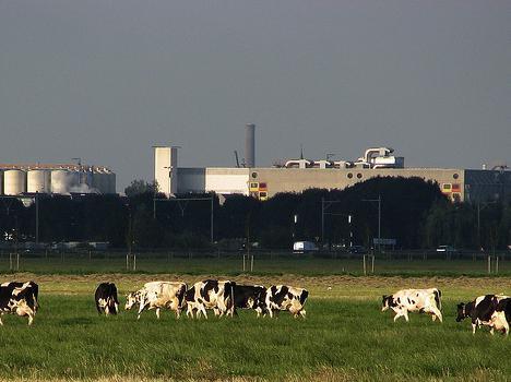 Дрожжи кормовые: производство, применение