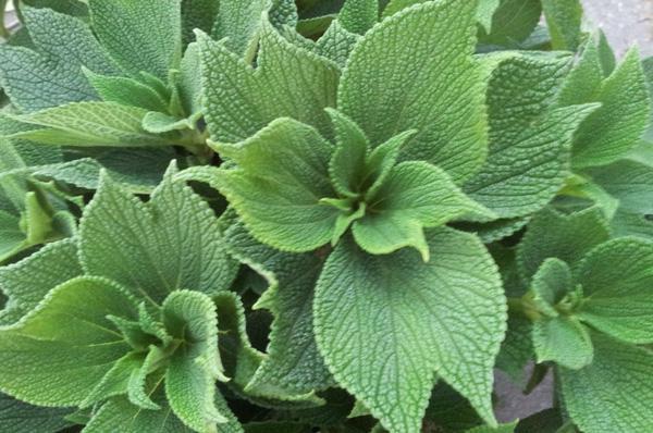 прядильные растения названия