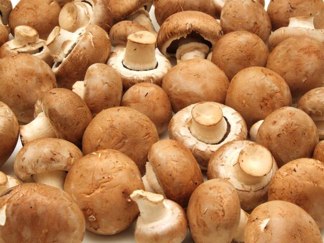 Що таке міцелій грибів