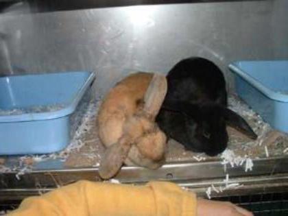 клетки для уличного содержания кроликов