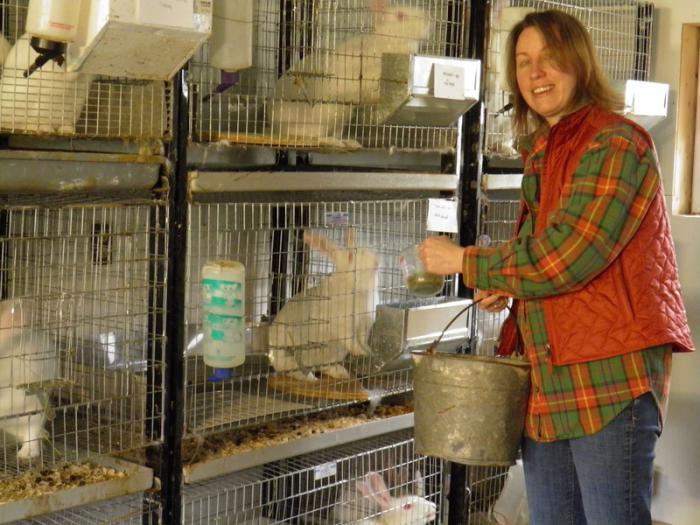 содержание кроликов зимой в клетках