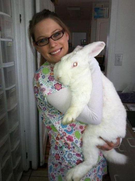 белый великан порода кроликов выход мяса