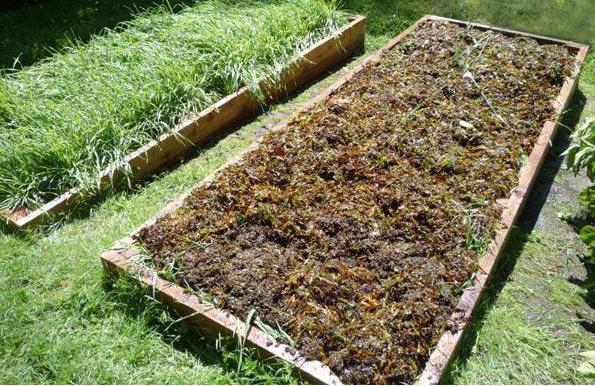 Сидераты для огорода