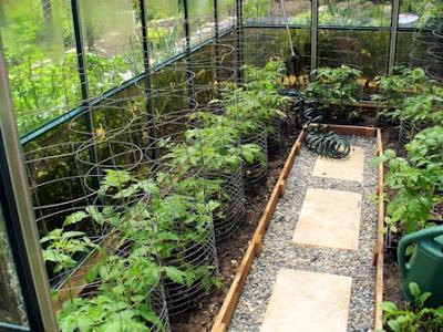 Как подвязать помидоры в теплице из поликарбоната Фото