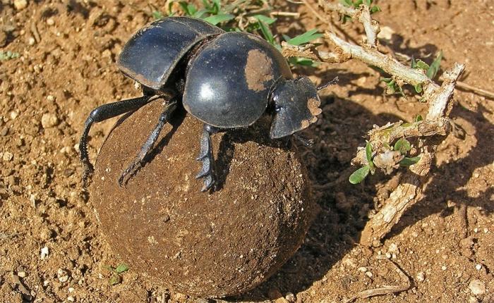 Навозные жуки от алкоголизма вывод из запоя в кашире 2