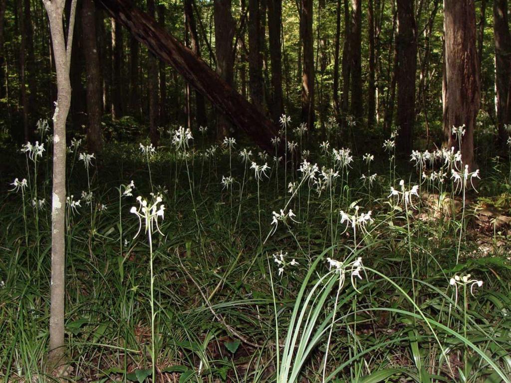 Строение орхидеи: части растения, описание, фото