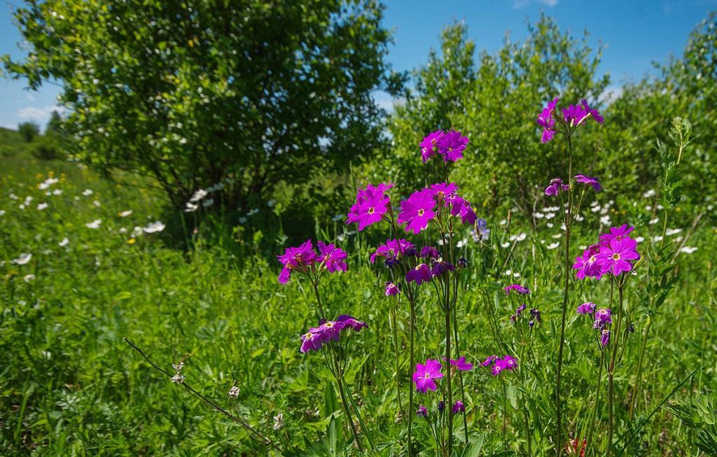 Картинки цветы хакасия стал