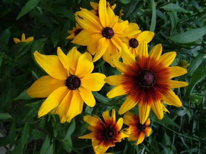 коричневый цветок