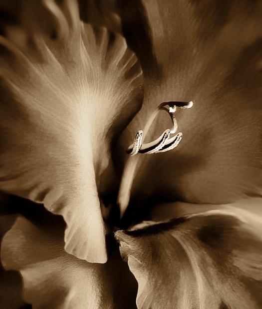 цветок коричневого цвета
