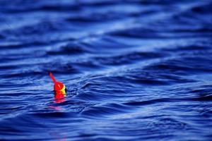 Саша Гоча предлагает поплавочный турнир на Суре.  Место на 30 человек есть.
