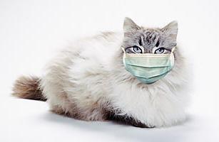 кальцивироз у кошки