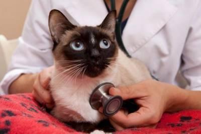 кальцивироз кошек опасен для человека