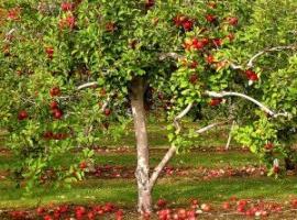 подкормка яблонь осенью