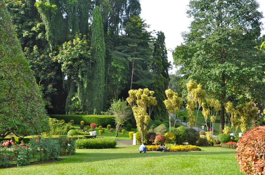 является шри ланка фото ботанического сада его используют