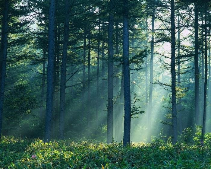 Сонник к чему снится лес