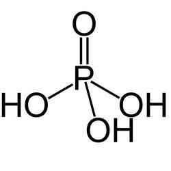 В состав молекулы днк входит фосфорная кислота