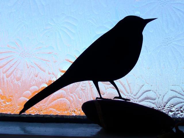 Залетают птички в домашних условиях