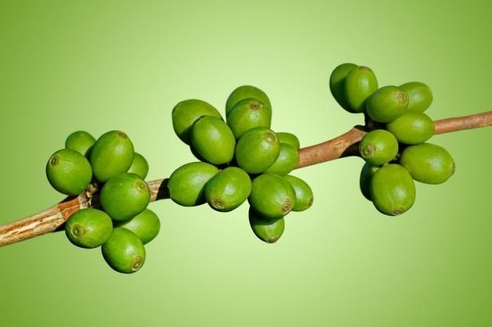 кофе зеленое для похудение
