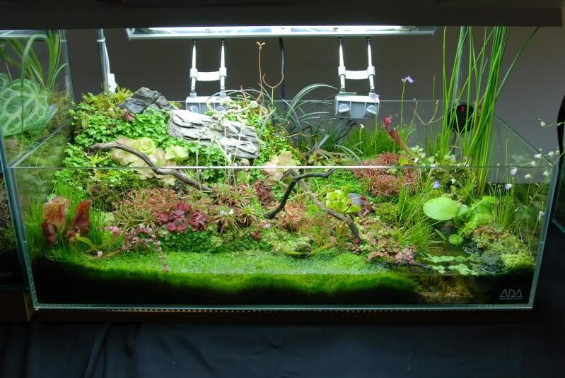 Растения для палюдариума: виды, условия содержания, фото. Создание и оформление палюдариума