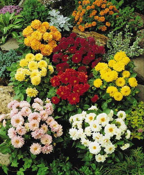 Илексru Доставка цветовбукетов и горшечных растений в Самаре