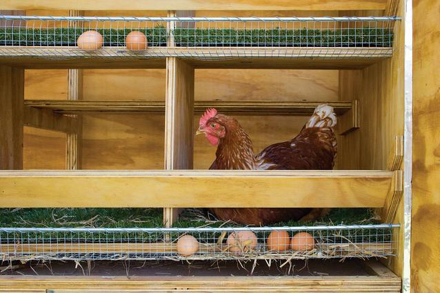 Как сделать гнездо для курицы