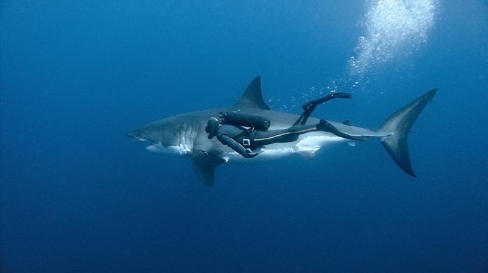 Самые большие и опасные в мире акулы