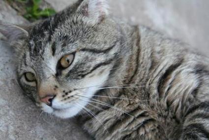 запор от глистов у кошки