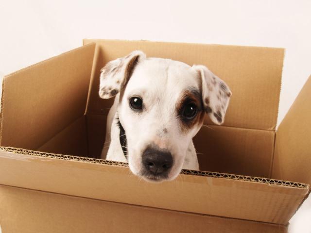 лежак для собаки из картонной коробки