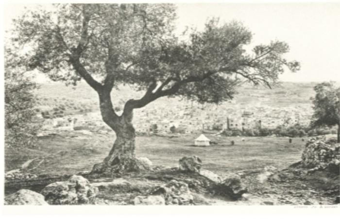 Мамврийский дуб: священная реликвия христиан