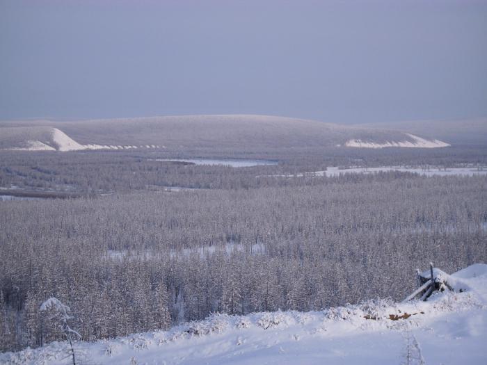 климат лесов россии