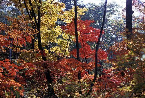 климат в лесной зоне