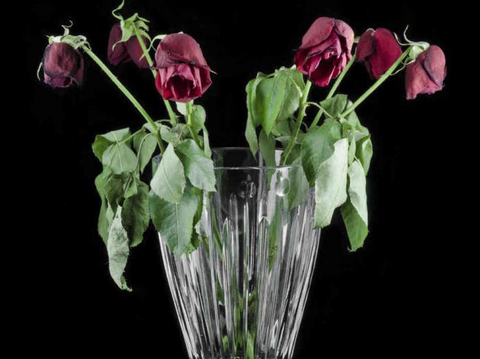 Как оживить розы и сохранить свежесть ...: fb.ru/article/138151/kak-ojivit-rozyi-i-sohranit-svejest-buketa-na...
