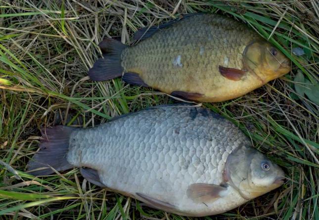 в жаркую погоду рыба клюет